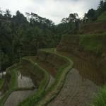 BALI: LO MAS POPULAR DE INDONESIA